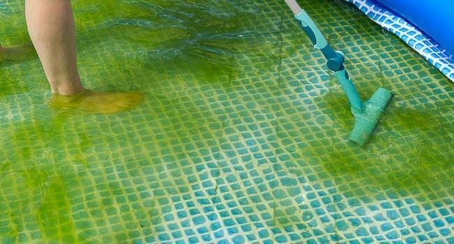 cleaning algae with brush