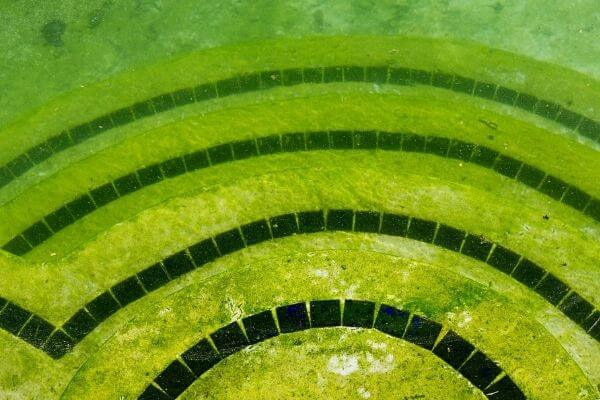 yellow or mustard algae in pool